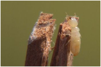 Termites What You Didn T Know