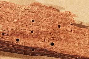 Wood Borer Treatments Pest Control Gold Coast Brisbane